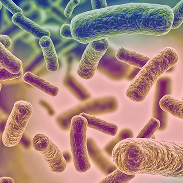 Microbiome intestinal