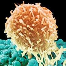 Emerging Trends in Immuno-Oncology: A Focus on Resistance